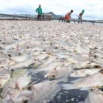 Fishkill in Batangas: A Result of Sudden Change in Temperature