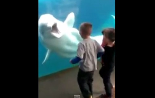 You Won't Believe How These Kids Does The Impossible With A Whale & Watch Their Reactions!