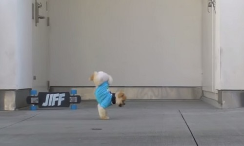 This Cute Dog Won't Fail To Entertain You With His Tricks. He's Really Amazing!