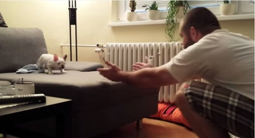 Meet Rocky, A French Bulldog On It's Viral Video