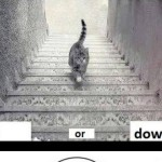 Netizens Divided Reactions on Catgate (Is Cat Going Up or Down)