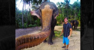 Elephant Grabs Man's Camera, Takes Epic 'Elphie'