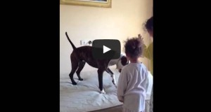 These Little Girls Learns the Secrets on How to Teach their Pitbull So the Internet Loves It