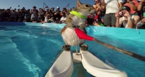 This Squirrel Showcased Her Water Skiing Skills and It's Pretty Hilarious
