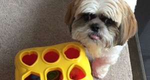 Watch: Clever Dog Solves Mathematical Problems.