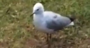Seagull's Reaction to Spicy Chip Drew Attention From Internet.