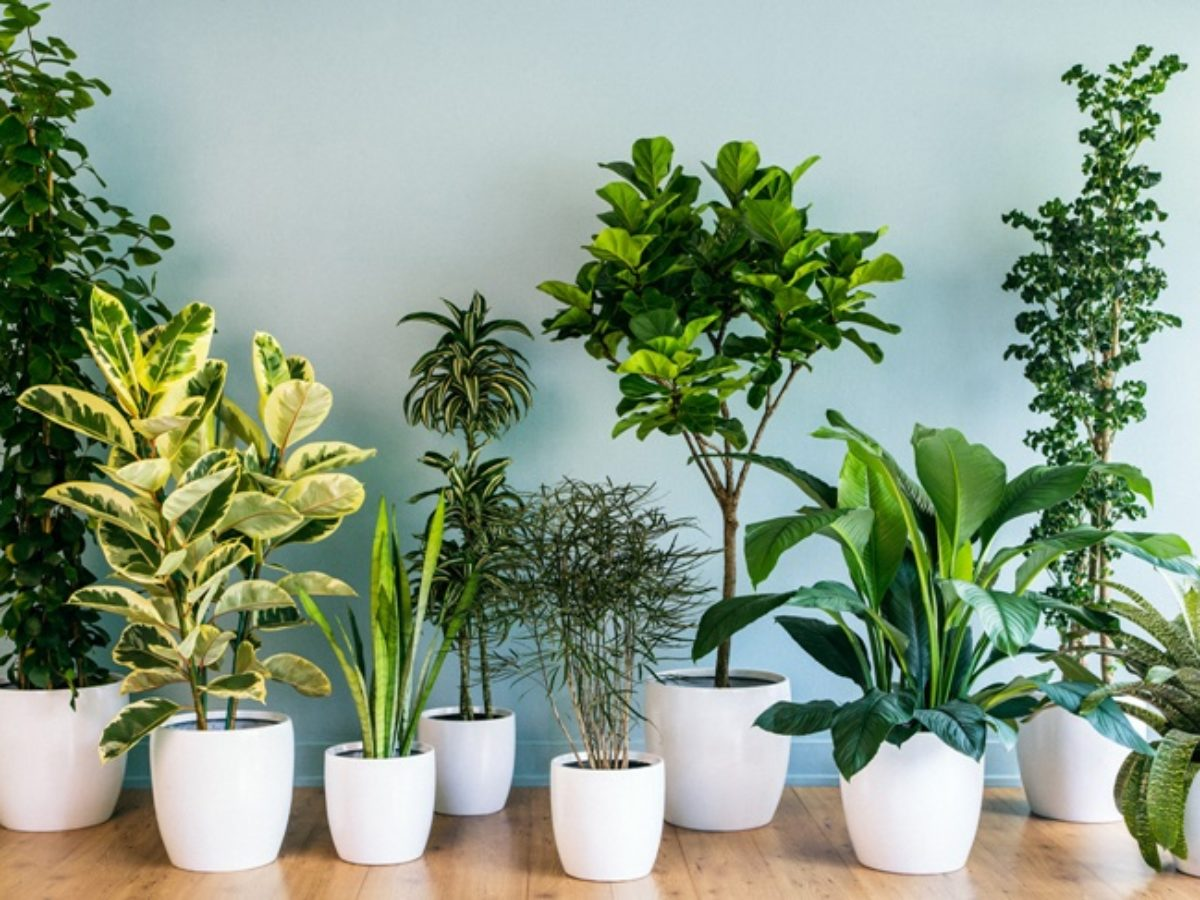 Purify Air At Homes Using These Best Houseplants   Philippine ...