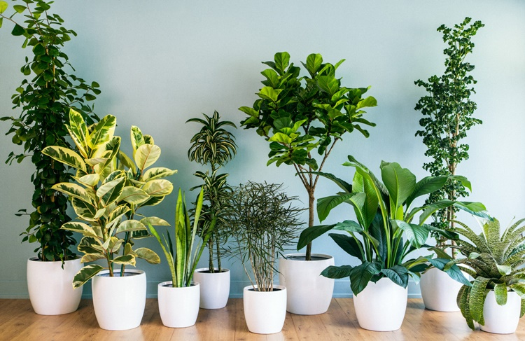 Houseplants Can Purify The Air That We Breathe Every Day And It Has Also Beneficial Effects For Our Health Here Are Some Effective In