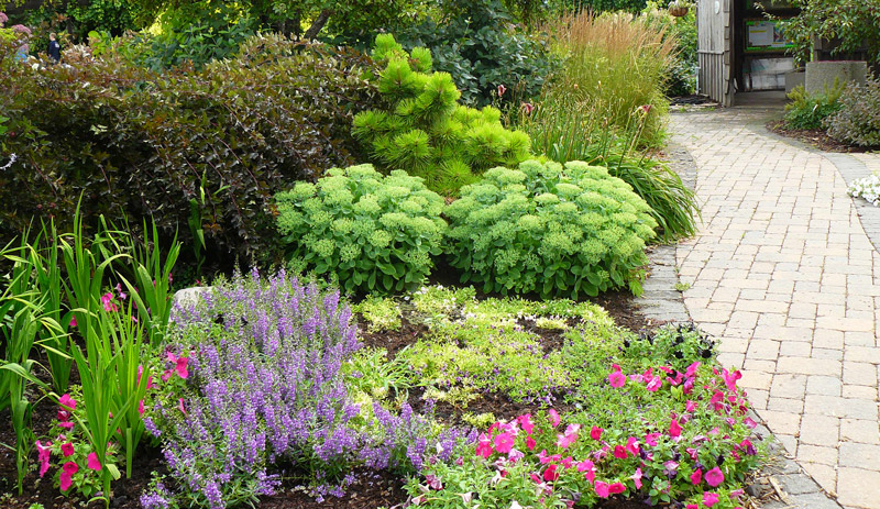 10 types of plants that gives positive energy at home - Dayton home and garden show 2017 ...