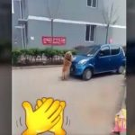 Video Of A Dog Saving Baby From A Car