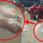 Another Weird Sea Creature Found In Bacolod, Is It A Sign Of Another Calamity?