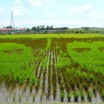 Coco Martin, FPJ Finally Meet In A Rice Paddy Art