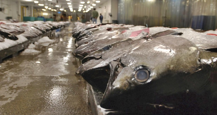 Us recalls frozen tunas from ph vietnam which resulted to for Hilo fish company