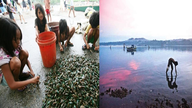 Red Tide Toxin