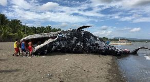 Dead Whale Sculpture In Cavite Wins Silver, Gold In Cannes Lions International Festival