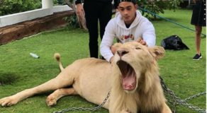 Netizens Scrutinized Diego Loyzaga's Photo With Chained Lion