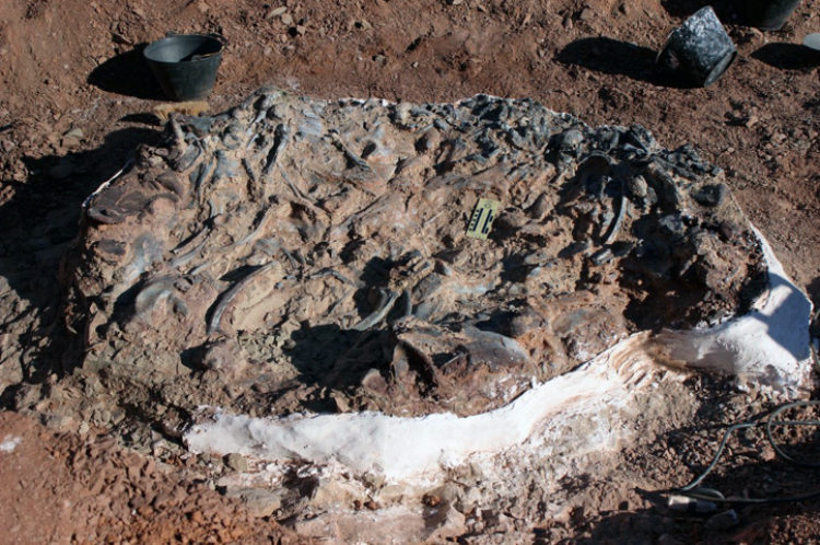 Dinosaur Fossils From 220 Million Years Ago Discovered In ...