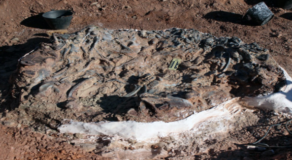 Dinosaur Fossils From 220 Million Years Ago Discovered In Argentina