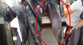 Bottlenose Dolphin Found Dead in Cebu, Is It Indicating Another Calamity?