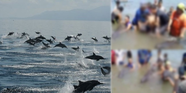 Local Tourists on dolphins