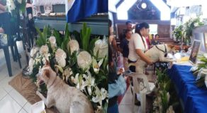 Heartbreaking Story of Loyal Dog Who Visits Master's Funeral Goes Viral