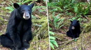 Young Bear Shot For Being Too Close With Humans