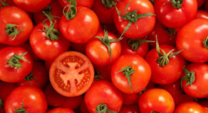 TOMATO – Health Benefits You Can Gain From A Veggie Fruit