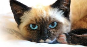 CAT FACTS – Here Are Some Of The Fascinating Truths About Cats