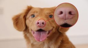 Facial Recognition Software That Works For Dogs By AI Startup