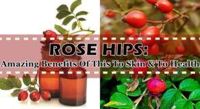 ROSE HIPS: Amazing Benefits Of This To Skin & To Health