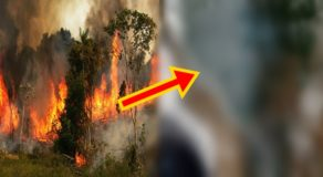 Amazon Wildfire: Smoke & Fire Can Be Seen From Space