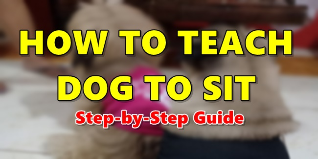 How To Teach Dog To Sit