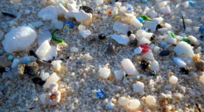 Microplastics – What Are Microplastics? (Answers)