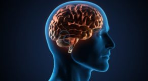 Brain – How Does Our Brain Turn Pain Up Or Down? (Answers)