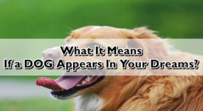 Dream Interpretation: What Does It Mean If A Dog Appears In Your Dreams?