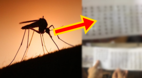 PHOTOS: Student Collects Dead Mosquitoes For Fun