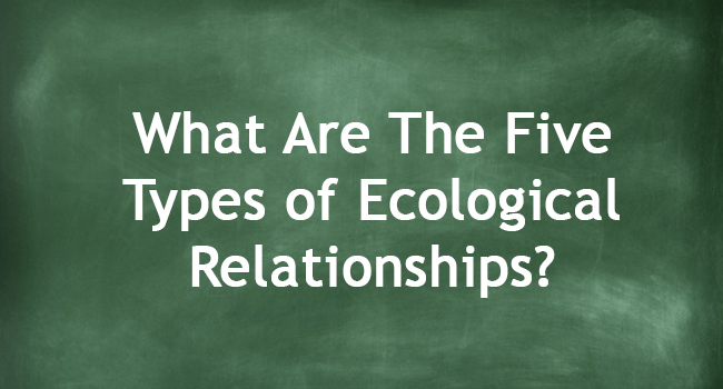 TYPES OF ECOLOGICAL RELATIONSHIPS