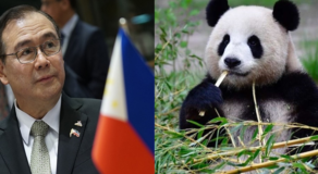 Teddy Locsin Rejects Offer Of Panda as Gift to Philippines