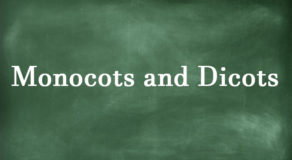 Monocots And Dicots – Difference Between The Two