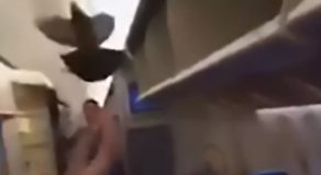 Flight Delayed After Pigeon Gets Stuck On-Board Plane