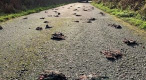 300 Dead Birds Suddenly Fall From The Sky (VIDEO)