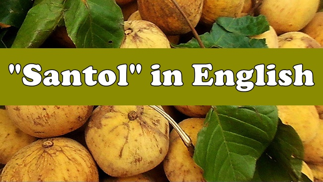 Santol in English