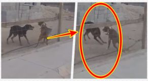 Dog Using Dustpan To Fight Off Other Dog Goes Viral  (VIDEO)