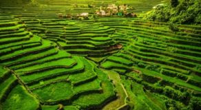 Rice Terraces Faces Critical Stage of Detrerioration – FAO