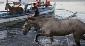 Animal Rescue In Taal Can't Be Prioritized By Gov't
