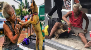 Homeless Elderly Man Spotted Playing with His Pet Dog Touch Netizen's Heart