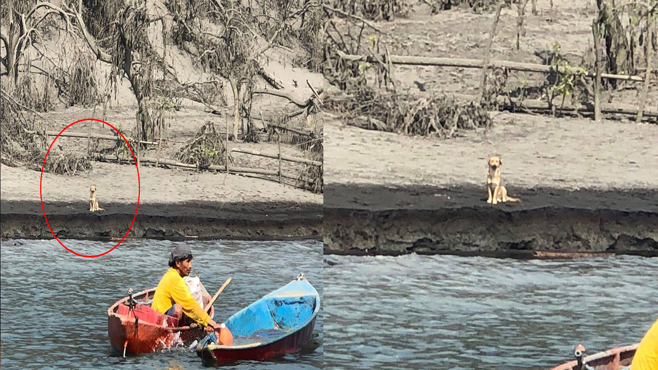 Dog Left Behind in Taal Patiently Waits for Its Master to Return Goes Viral