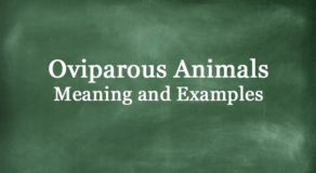 What Are Oviparous Animals? Definition And Meaning