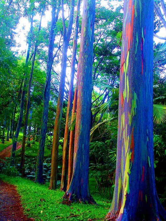 Marvelous Rainbow Trees