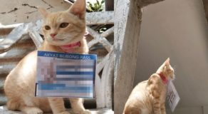 Cat Wearing Akyat Bubong Pass Goes Viral Online